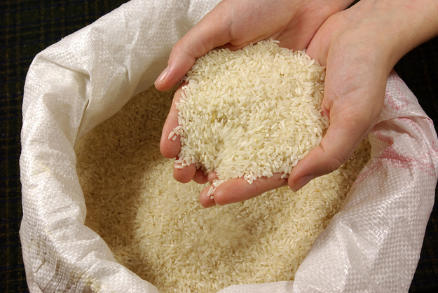 rice_in_hand